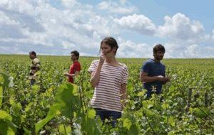 ce qui nous lie feel good movie scène de travail de la vigne