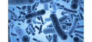 Microbiote : Définition & fonction d'un ami discret