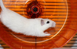 Hamster dans sa roue - du burn out